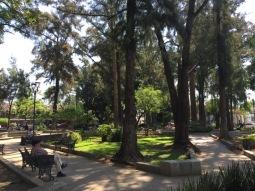 Oaxaca beautiful park