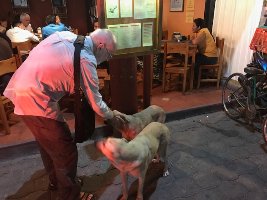Mayer with street dogs